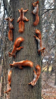 Too. Much. Squirrels. - eight squirrels on a tree trunk