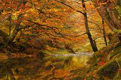Selva de Irati 1229421