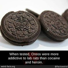When tested, Oreos were more addictive to lab rats than cocaine and heroin. Wierd Facts, Weird, Lab Rats, Unbelievable Facts, Healthy Alternatives, Meaningful Quotes, Addiction, Food And Drink, Oreos