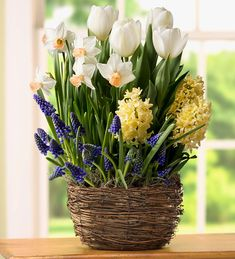 White Tulip, Narcissus and Hyacinth Bulb Gift Garden - Ships February-June 2017