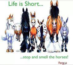 Funny horse cartoons