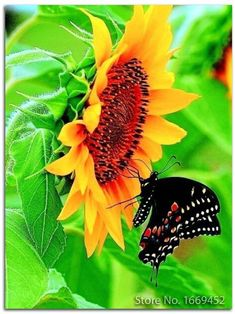 Swallowtail butterfly-and beautiful sunflower - Butterfly Kisses, Butterfly Flowers, Beautiful Butterflies, Beautiful Flowers, Monarch Butterfly, Butterfly Mosaic, Sun Flowers, Butterfly Dragon, Happy Flowers