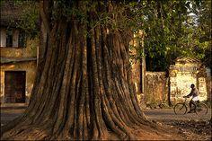 Fort Cochin, Kerala, India    T R E E. Fort Cochin (by Claude Renault)