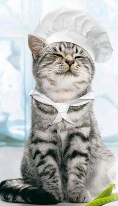 Makes my heart melt.  OMG, it's like they took this pic for me!!  The cat lady chef lol :)