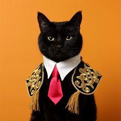木野聡子 Akiko Kino on – Cats. Crazy Cat Lady, Crazy Cats, I Love Cats, Cool Cats, Pretty Cats, Beautiful Cats, Animals Beautiful, Fancy Cats, Cat Costumes