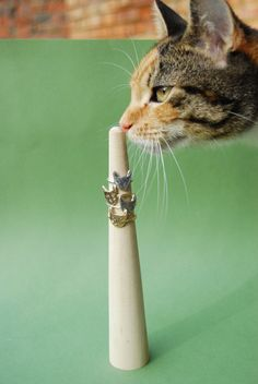 Just a kitty sniffin' some kitty rings.