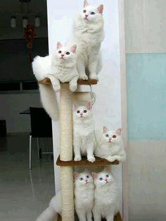 Gatos lindos.