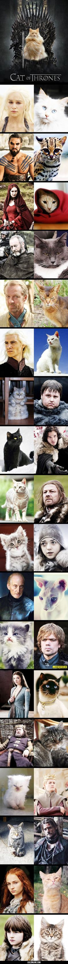 The Cat Of Thrones