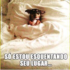 Sei...sei... #boanoite #cachorro #filhode4patas #maedecachorro #paidecachorro #amoanimais #petmeupet #cachorroterapia #cachorroetudodebom #caopanheiro Dachshund Puppies, Pet Dogs, Dog Cat, Love Pet, Whippet, Cute Funny Animals, Pet Shop, Memes, Animals Beautiful