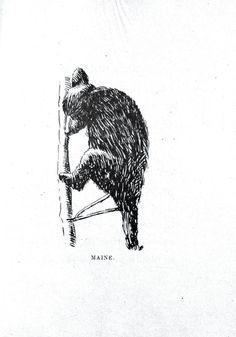 public domain bear - Google Search