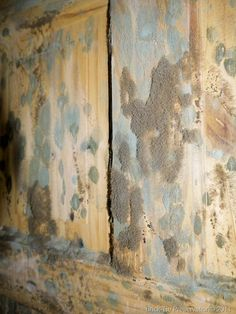 Mouldy door to the back bedroom of a flooded house in Harrogate