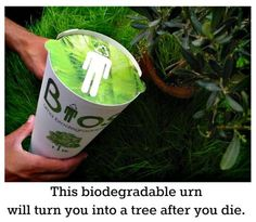 The biodegradable-urn is an alternative to the traditional cremation urn. It is made from eco-friendly materials such as coconut shell, compacted peat, and cellulose and biodegrades harmlessly when placed in the ground. Inside the urn is room to place crematory ashes and a tree seed. The urn is then placed in the ground where the tree-seed germinates and begins to grow into a tree. The ashes are a good source of phosphorus and they nourish the tree as it begins it's new life.