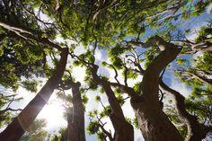 Tree in Woodstock Gardens, Inistioge, Ireland