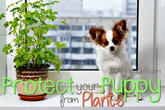 Protect Your Puppy f