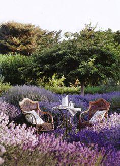 tea amongst the lavender...