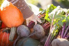 Frisch zubereitete Beikost mit saisonalen Zutaten versorgt Ihr Baby optimal mit Vitaminen und Nährstoffen. Im Herbst liegt die Verwendung von Kürbis und Roten Rüben nahe. Doch eignet sich dieses Gemüse überhaupt? - meinefamilie.at   #baby #rezepte #babybrei #gesund #babyrezepte #herbst #herbstgemüse #saisonalerezepte #saisonal #vitaminreich #babyfüttern #meinplan_at Baby Massage, Blog Love, Baby Feeding, About Me Blog, Fruit, Food, Baby Recipes, Recipes With Pumpkin, Fall Vegetables