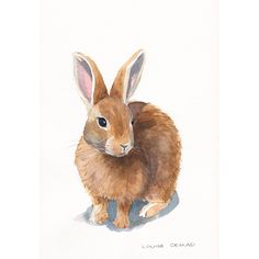 Rabbit Painting Archival ORIGINAL watercolor by Splodgepodge