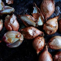 Slow roasted shallot dressing