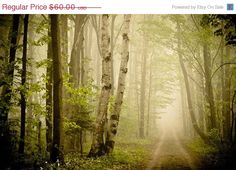 4th of July Sale Spring .Dreamy green woodland by joystclaire, $51.00