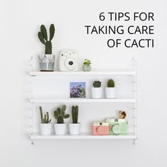 6 TIPS FOR TAKING CARE OF CACTI: www.candypop.uk.c...