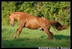 horse / feeling frisky
