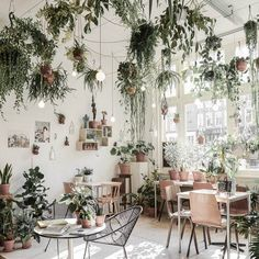Bright and airy feels!  via Pinterest (if you know the source please tag) #PLNTLVRS #plantspiration #plants #indoor #indoorplants #jungle #interior #interiordesign #interiordecor #houseplants #indoorgarden #love #want #need #melbourne #weloveplants #interiors #homedecor #inspiration #green #plantcorner #interiorinspo #bright #naturallight #happymonday #jungalowstyle