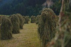Heaps of hay Vineyard, Photos, Outdoor, Scenery, Outdoors, Pictures, Vine Yard, Vineyard Vines, Outdoor Games