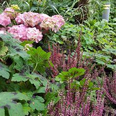Hortensia, ljung och brunnäva. 🌼 Ekborg Garden Design