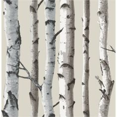 Fine Decor - Papier Peint Beige Naturel/Crème - FD31051 - Forêt Bois Bouleau de Fine Decor, http://www.amazon.fr/dp/B009E45INM/ref=cm_sw_r_pi_dp_qUFbtb14XKBGX/279-0354768-4267439