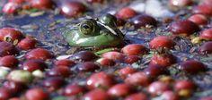 Canberry bog!!