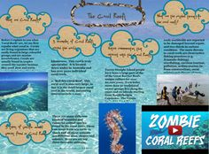 Most of the coral reefs we can see today were formed after the last glacial period when melting ice caused the sea level to rise and flood the continental shelves. This means that most modern coral reefs are less than 10,000 years old. As communities established themselves on the shelves, the reefs grew upwards, pacing rising sea levels. Reefs that rose too slowly could become drowned reefs. They are covered by so much water that there was insufficient light. #Glogster #CoralReef