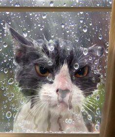 Raindrops Keep Fallin' on My Head -- ☺