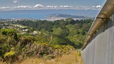 In the past 30 years, a wilderness has grown up in the heart of New Zealand's capital – so successfully its neighbours now complain about the raucous racket of rare birds. But this is just the first step in a much longer plan for wilderness in the city.