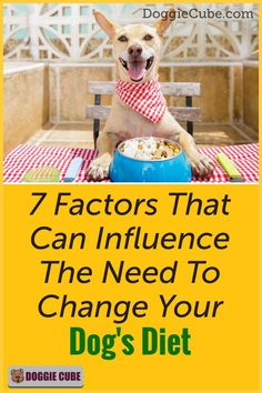 Changing your dog's food is not an easy decision to make as it can cause problems for your dog. When do you need to change your dog's diet? Here're 7 factors that can influence that decision. Dog Diet, No Cook Meals, Factors, You Changed, Dog Food Recipes, Your Dog, Cube, Canning, Easy