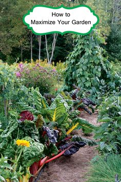 Everyone wants to get the most out of the things they have and that is no different for the garden. You would be surprised how much more you can get out of your garden by following these simple steps. These steps have helped my garden become more productive using less money and less time. As…