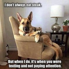 Funny Animal Pictures 24 Pics #LandscapeDesign