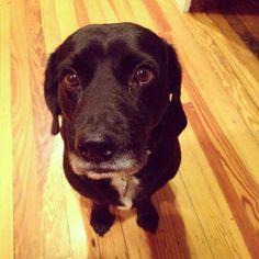 Guiltiest dog ever