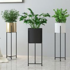 Tall Classy Plant Stand and Pot - Flower pots - Plants Tall Plant Stands, Metal Plant Stand, Modern Plant Stand, Diy Plant Stand, Stand Tall, Tall Plant Stand Indoor, Black Plant Stand, Living Room Plants, House Plants Decor