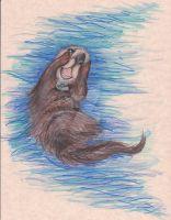 Tucker the Sea Otter by pegacorna2
