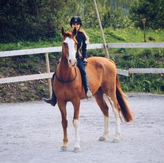 The most important role of equestrian clothing is for security Although horses can be trained they can be unforeseeable when provoked. Riders are susceptible while riding and handling horses, espec… Cute Horses, Pretty Horses, Horse Love, Beautiful Horses, Bareback Riding, Horse Riding, Horse Photos, Horse Pictures, Horse Girl