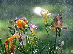 #storm #rain #weather #regen #wind #boenderpint