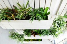 Self-watering solutions for a vertical garden.