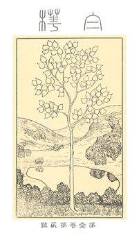 "Cover page of ""Shirakaba"" 学習院大学史料館"