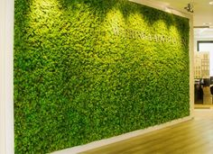 These vertical green walls are a more cost effective option, require minimal maintenance and can be supplied in a variety of different colour shapes and sizes. Description from officelandscapes.co.uk. I searched for this on bing.com/images