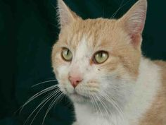 BINGO is available for adoption from @CUHumane #Urbana #Champaign #IL www.cuhumane.org PINNED 10/3/15 (CHAMPAIGN COUNTY HUMANE SOCIETY) Please click on the PET HARBOR link to see full BIO. Thanks.