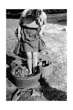 Italian Vintage Photographs ~ Wine Treading in a Vat, Italy Giclee 1930 Vintage Pictures, Old Pictures, Old Photos, Italian People, Vintage Italy, In Vino Veritas, Vintage Photographs, Black And White Photography, Street Photography
