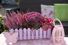 Pinker Mix aus Aster, Purpurglöckchen, Ziergras und Heidekraut