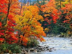 Stream in Autumn Woods Posters at AllPosters.com