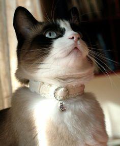 Coleira de gato em crochet feita à mão brilhante by MehlBoutique