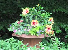 Lots of ideas here for summer flower arrangements in containers